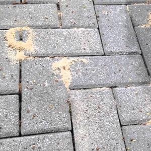 ant infestation under paving stones 300x300px